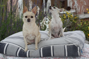 Biscuit and Coco on their vintage French Ticking dog bed. Custom sizes available.