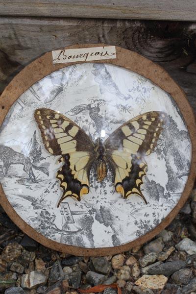 butterflyAR6.jpg