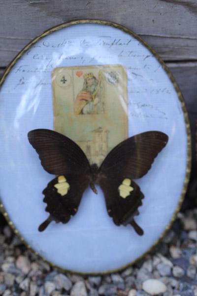 butterflyar3.jpg