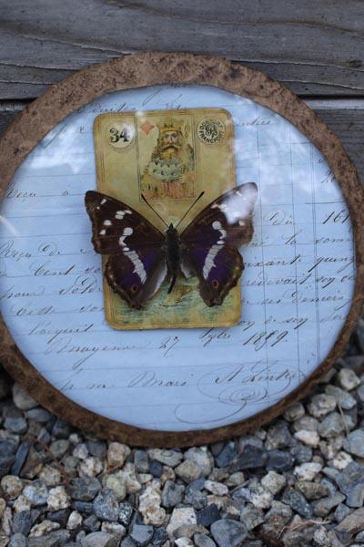 butterflyar9.jpg