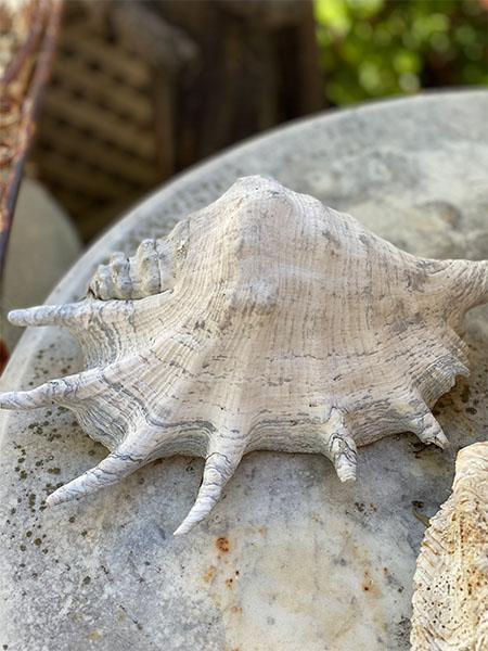 seashellL2.jpg